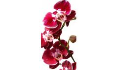Samolepicí fototapeta na podlahu Orchid, Červená Orchidea