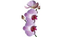 Samolepicí fototapeta na podlahu Orchid, Orchidea