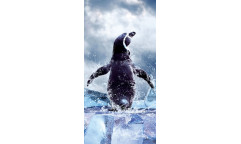 Samolepicí fototapeta na podlahu Penguin, Tučňák