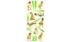 Samolepka Ducklings 60452 Housata