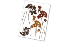 Samolepka Lady´s Smock 17005 Květiny