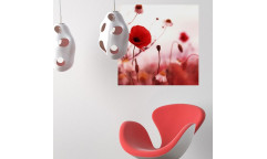Samolepicí malířské plátno GoBig WallPanel Romantic Poppies - Vlčí máky