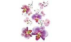 Samolepka Orchidej F 466