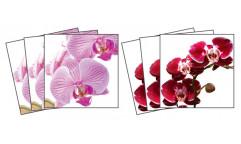 Samolepky na kachličky Orchids TI 011 Orchidea