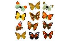 Samolepka Colourful Butterflies 54453 Barevní motýli